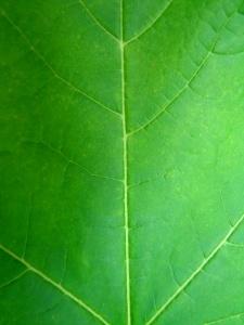Pikavippiyritys tukee ympäristönsuojelua